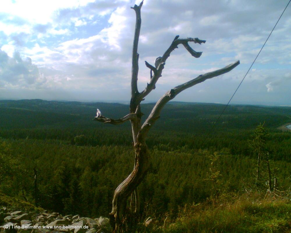 Auf dem Kahleberg bei Altenberg - 17.7.2012